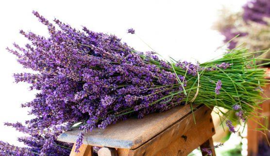 lavenderr